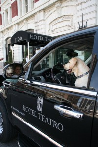 Pet Friendly, Hotel Teatro